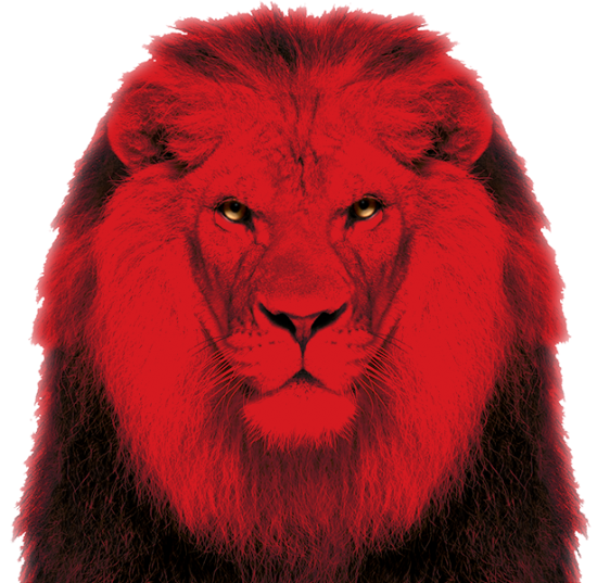 Brandforward online marketing leeuw
